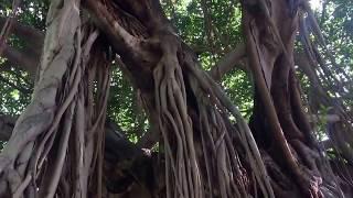 🔴 ДЕРЕВО ЖЕЛАНИЙ 🔴 САНКТ ПЕТЕРБУРГ во ФЛОРИДЕ  Florida USA