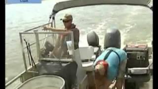 Азиатские карпы губят реки и нападают на людей в США видео