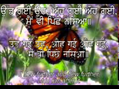 few lines on butterfly in hindi