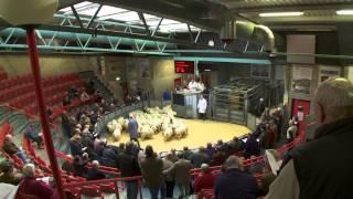 Scotland's Farming Year - Autumn