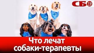 Канистерапия: что и как лечат собаки-доктора