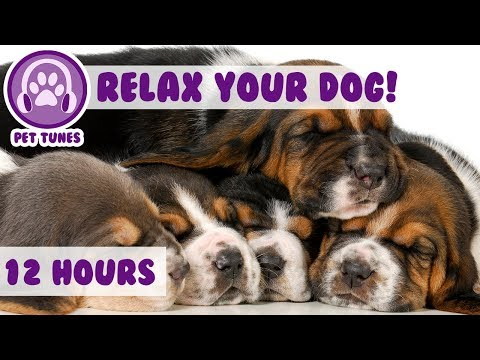 How to Calm my Dog in my House - Relaxing Dog Music Has Helped Over 4 Million Dogs - Give it A Try