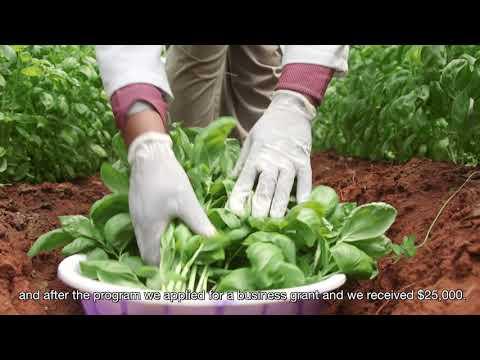 "Taita's ""Smart"" Greenhouses"
