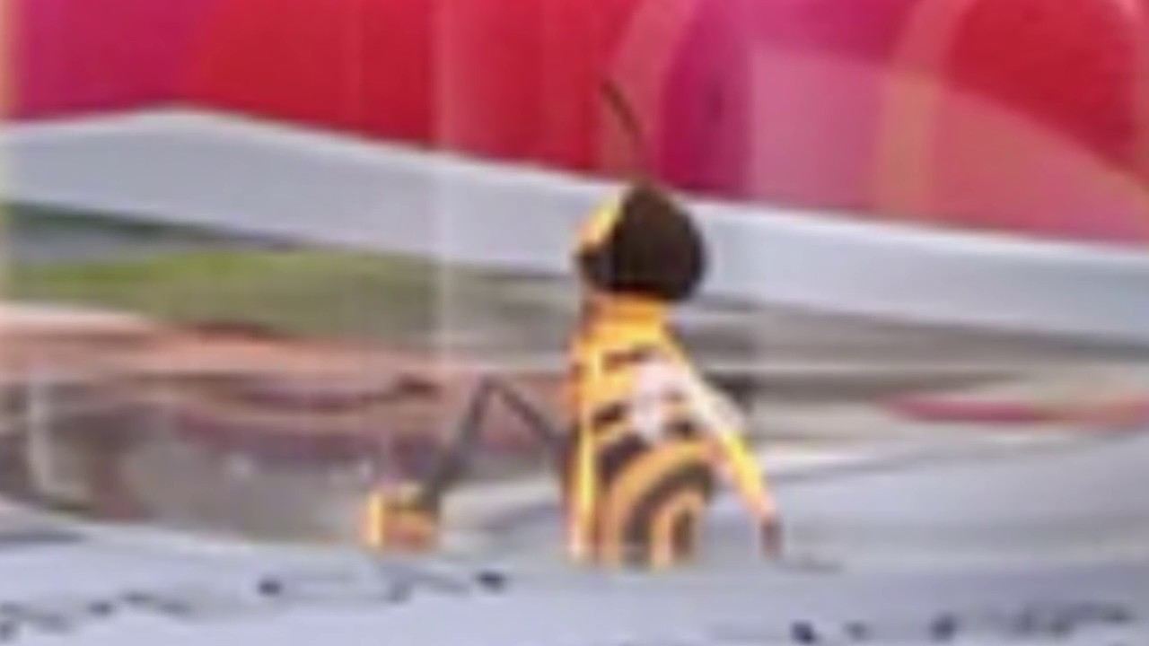 Download Professional Narrator Tries to Read the Worst Bee Movie Fan Fiction