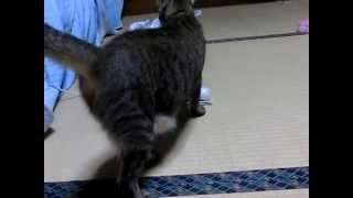 猫のしまちゃん!2ブログ Keaki100の日記.