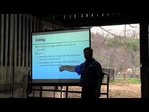 Beef Cattle Health & Breeding Options 1