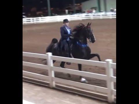 American Saddlebred, five-gaited mare, American Saddlebred Show horse