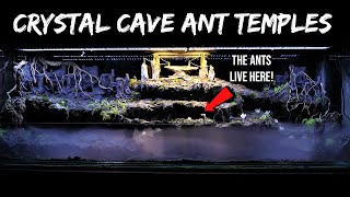 My New 'Crystal Cave Temple' Terrarium for Ants | The Golden Empire
