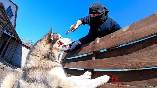ВОР ЗАЛЕЗ ВО ДВОР! Реакция собаки ! Burglar PRANK