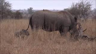 Krugerpark  Zuid - Afrika  2016