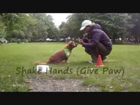 48 Easy Dog Tricks - for Novice Trick Dog Title   www.trick-dog-training.co.uk