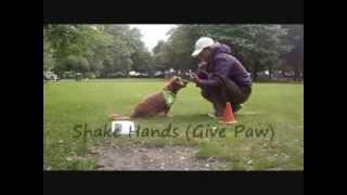 48 Easy Dog Tricks - For Novice Trick Dog Title   Www.trick-dog-training.co.uk