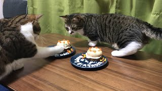 ゆずぽんず、1歳の誕生日おめでとう   Yuzu and Ponzu Happy 1st birthday.