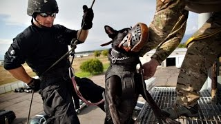 Repeat youtube video Police Dog Tribute (HD)