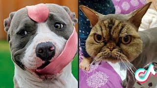15 Minutes Straight of the Cutest Pets on TikTok