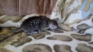 Котята 4 недели