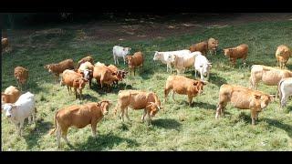 Bientraitance animale avec l'élevage Bio Nature Viande