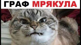 - Лютые приколы. Котик ВАМПИР