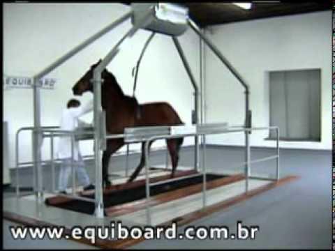 Equipo de ejercicio para caballos veterinaria for Aparatos de ejercicio