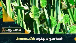 உடலை சீர்படுத்த உதவும் பிரண்டை  | அறிவோம் ஆரோக்கியம் | Puthuyugam TV