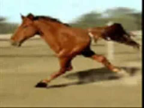 photo cheval de zorro