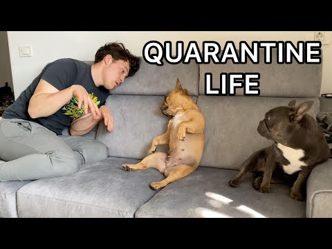 Quarantine Life With 2 Dogs