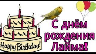 День Рождения у Лаймы! Попугайчику 1 год.  23.12.16