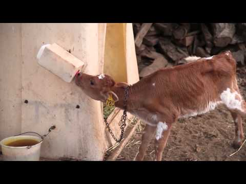 How To Make Cheese | Organic Dairy Farming