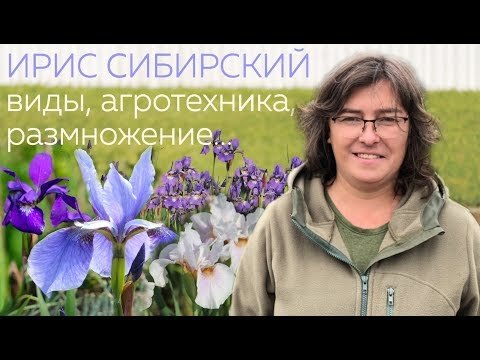 Ирис сибирский виды, агротехника, размножение...