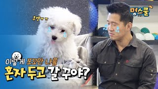 training of separation anxiety, we can prevent it │Kang Hyung Wook's Mung School Beginner owner