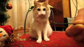 CAT strips wires / Кот зачищает провода