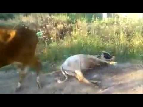 Best funny short videos- WhatsApp funny video of animals thumbnail