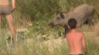 turysta pogryziony przez dzika tourist bitten by boar