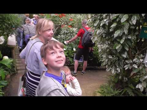 The Tropical Butterfly House Sheffield Part 1