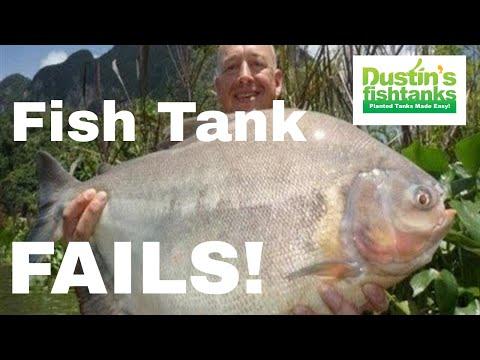 Fabulous Fish Tank FAILS