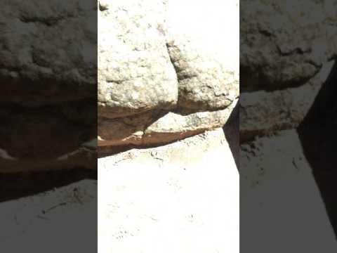 Nicholas Markowitz gravesite-Lizards Mouth