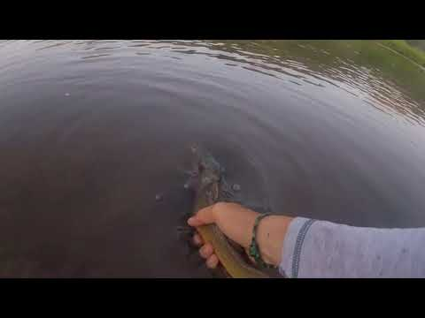 Lillard Fly Fishing Yellowstone Edit