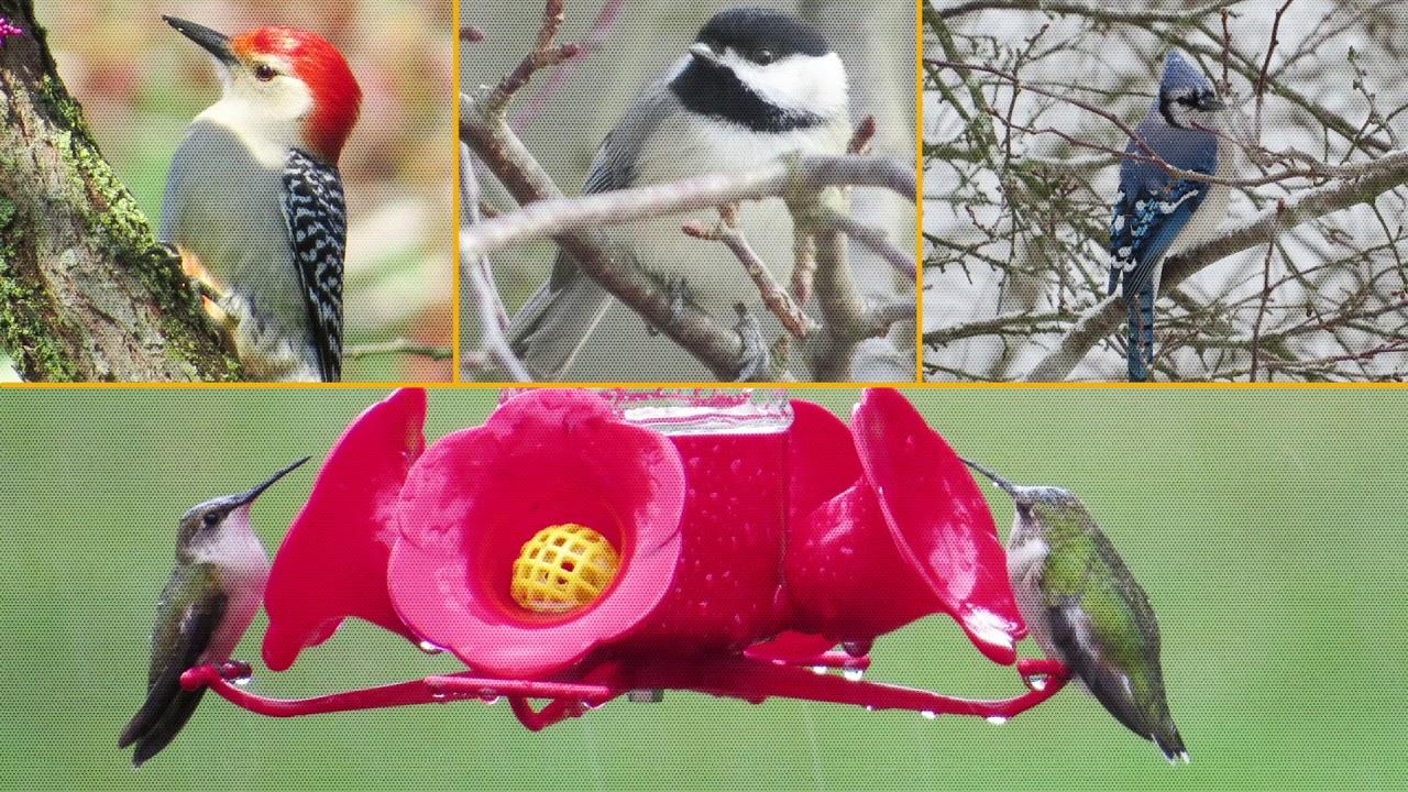 Bird Club PSA BGC Westminster