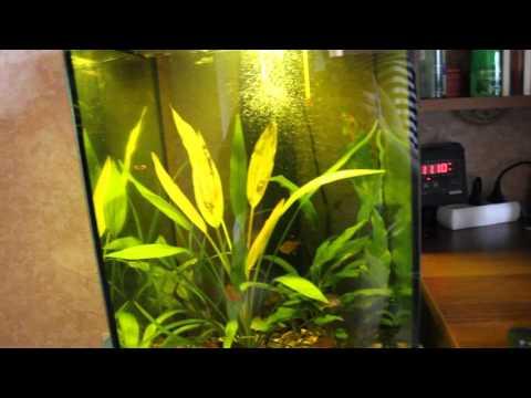 Как сделать аквариум необычной формы своими руками