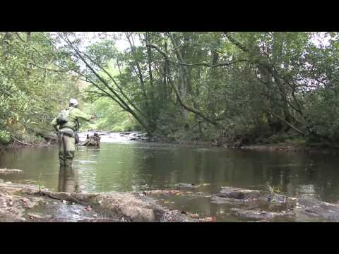 Fly Fishing For Monster Wild Trout In Georgia