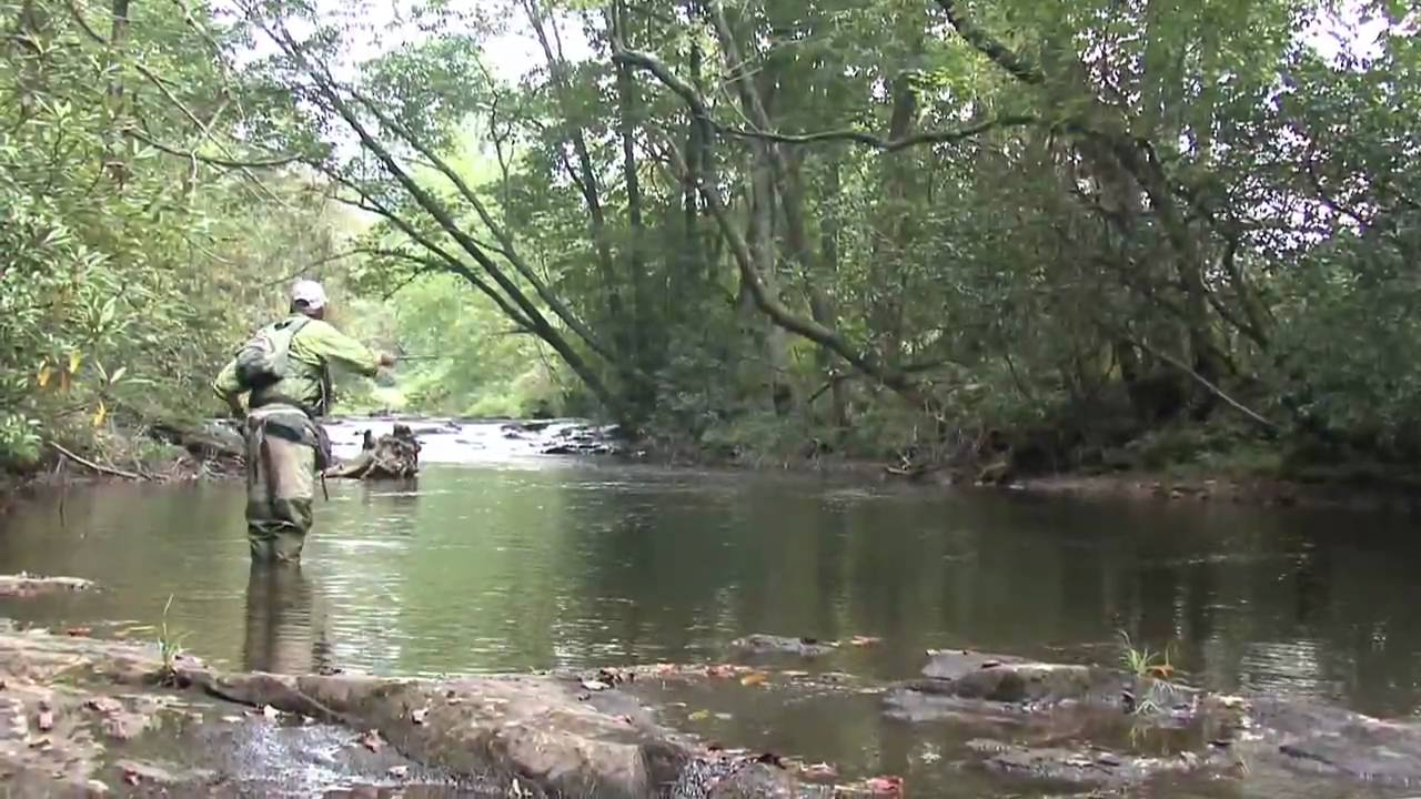 Fly fishing for monster wild trout in georgia youtube for Fly fishing north georgia