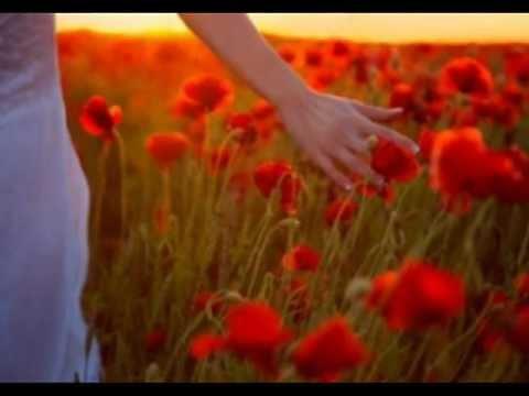 Resultado de imagem para um amor sublime