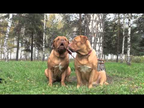 AMAZING DOGS Singing Happy Birthday Song for YOU - MUST WATCH If You LOVE Dogs!!!