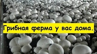 видео Выращивание грибов шиитаке в домашних условиях: условия и технология