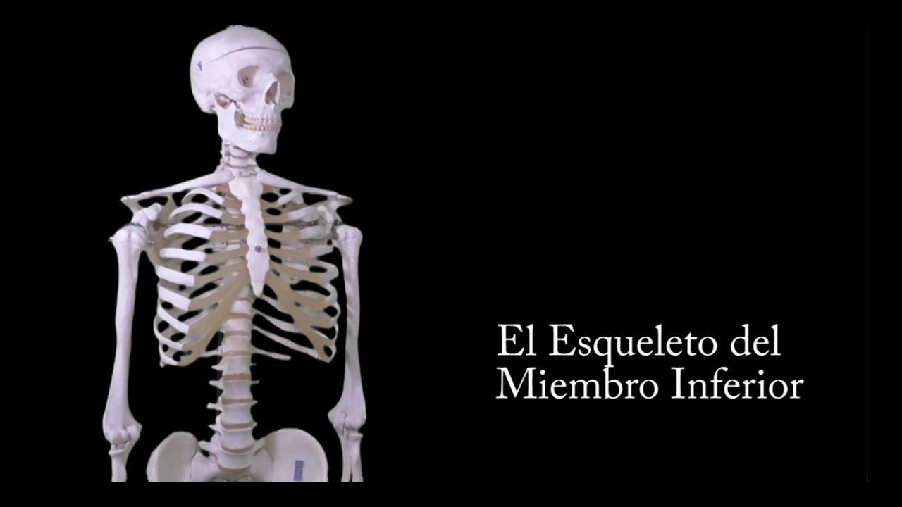 MIEMBRO INFERIOR Dr. Orellana - YouTube