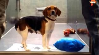 Копия видео Отношения к животным и с животными на Западе