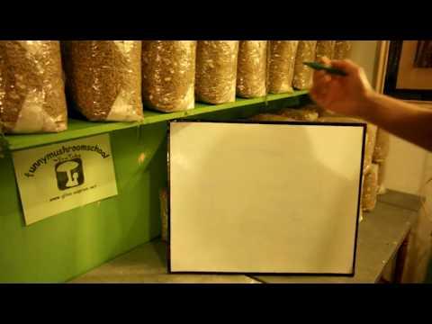 бизнес план по выращиванию грибов вешенки