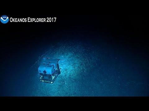 Camera 2: Gulf of Mexico 2017