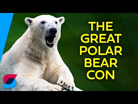 If The World Is Warming, Why Are There More Polar Bears Now?