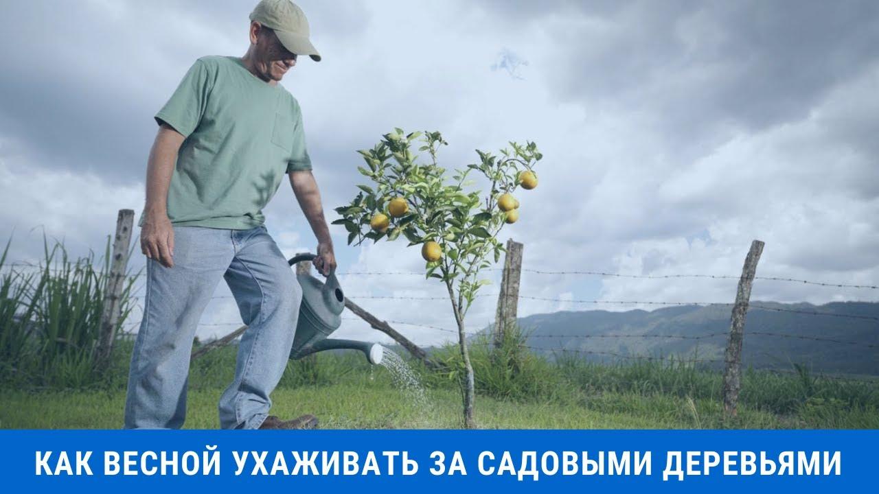 Как весной ухаживать за садовыми деревьями в Сибири